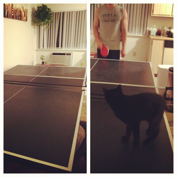 We got a ping pong table! And Nymeria is absolutely adorable with us playing. Need to get a video