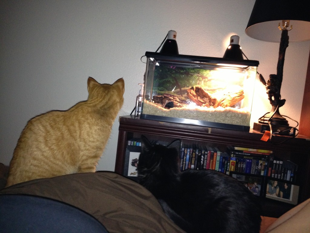 The cats FINALLY realized Dovah exists last night. They were so curious and interested they didn't want to sleep