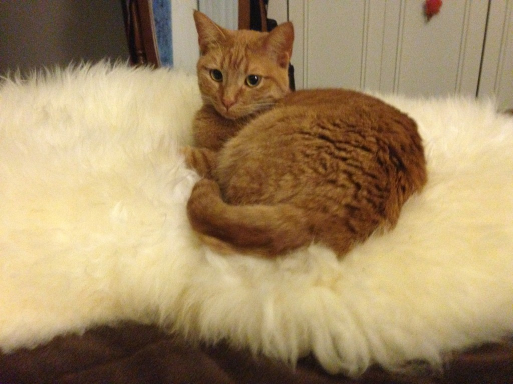 Sajah loves the sheepskin from New Zealand!