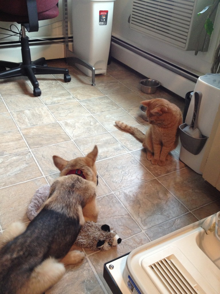 How to help your dog and cat get along hungry and fit Can a dog tell if another dog is sick