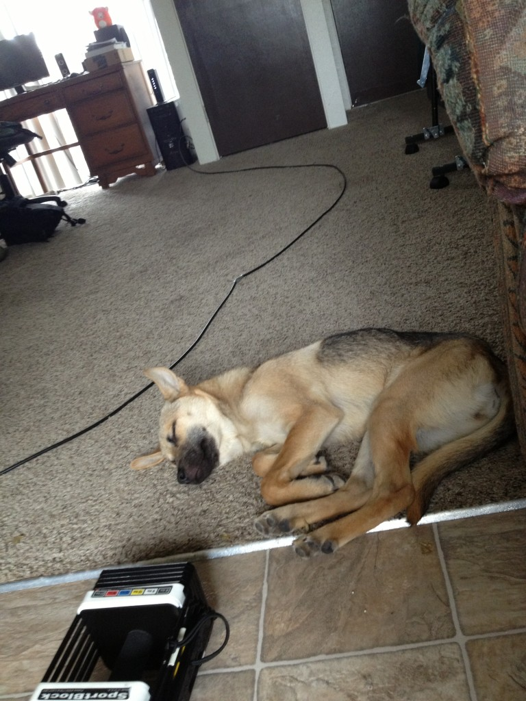 Home workouts with a sleeping pup