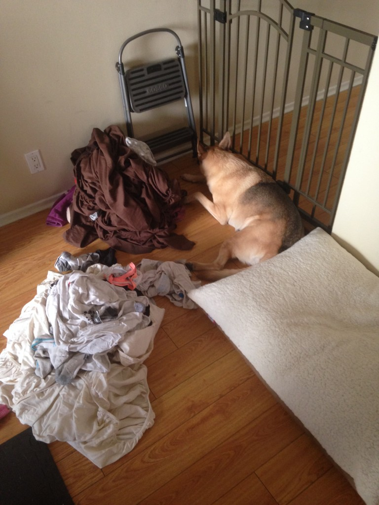 Noke helping with laundry