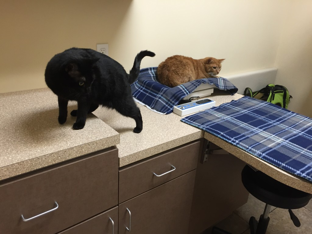 Kitties to the vet