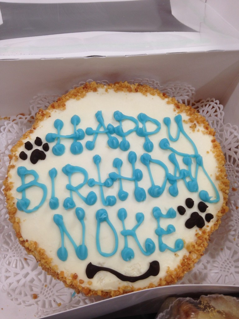 Noke turned 3!