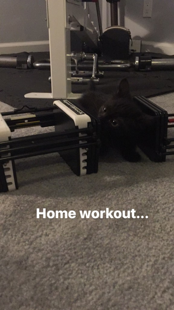 One of our current (and my favorite) foster kitten trying to work out with me