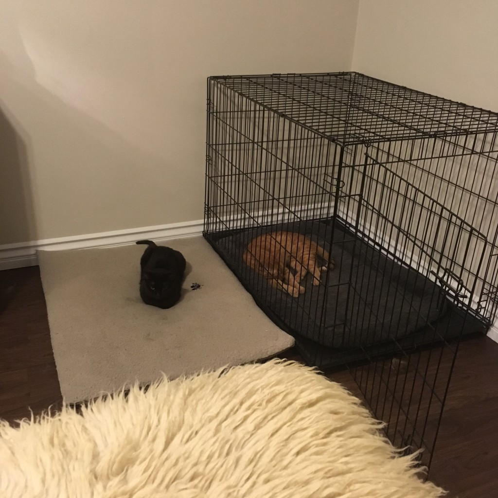 Animals are settling in really well to the new place