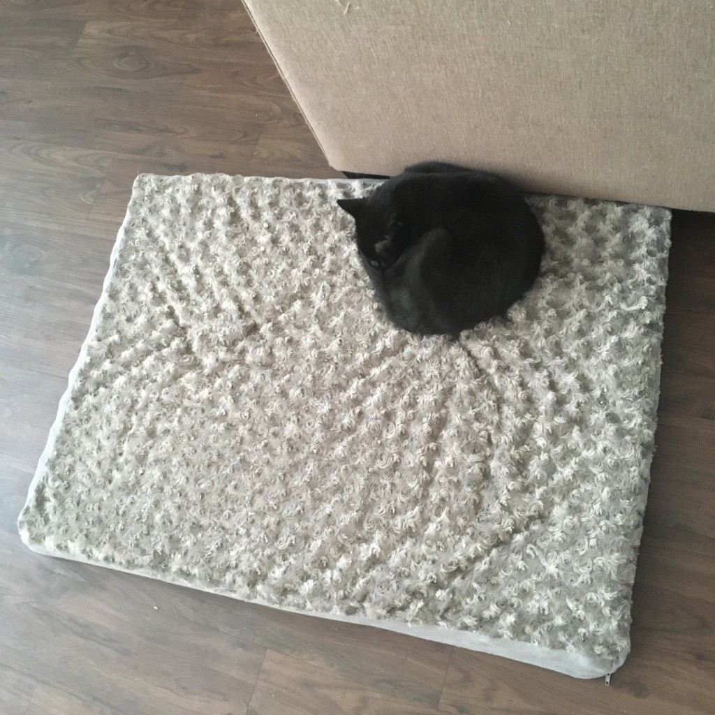 (That's Noke's new bed...)