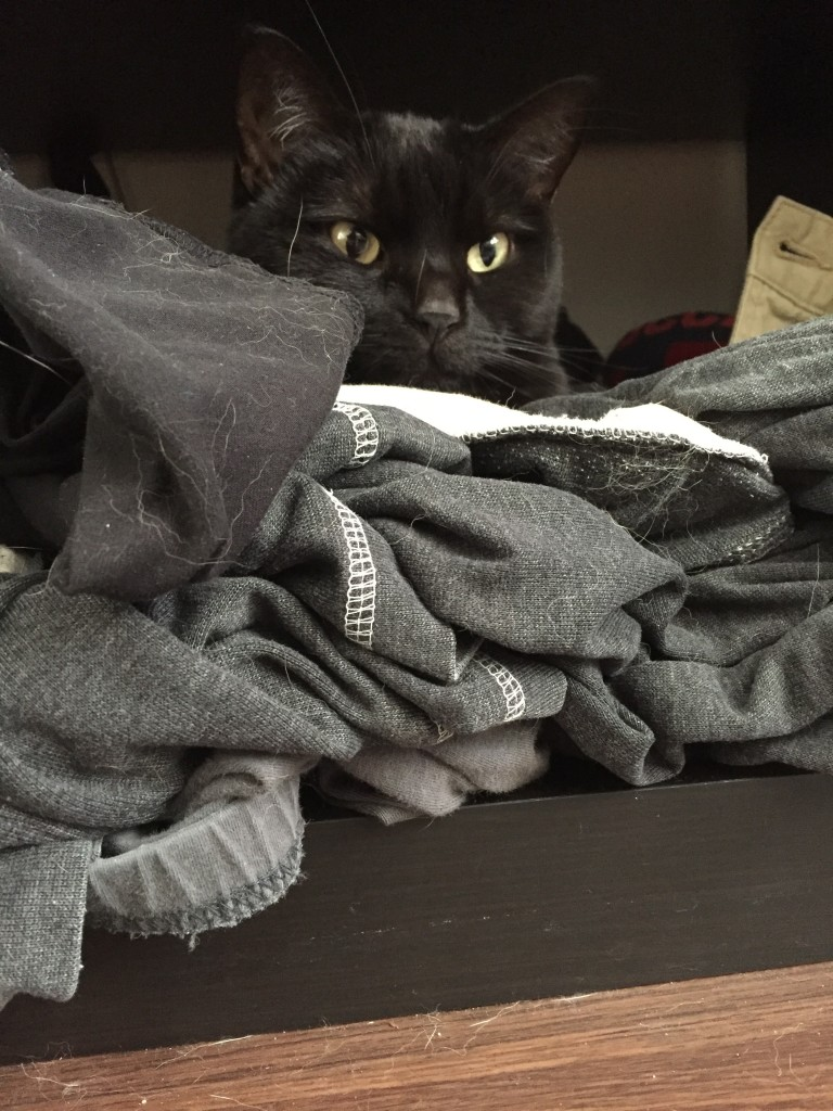Nymeria has gotten into the habit of sneaking into my clothes shelf and sleeping there